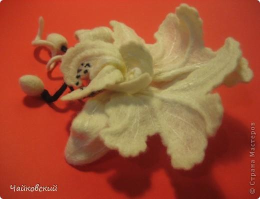 Орхидея катлея фото 4