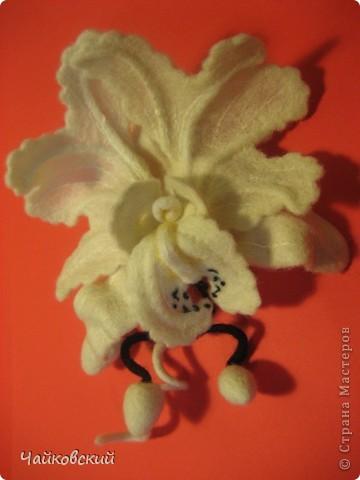Орхидея катлея фото 5