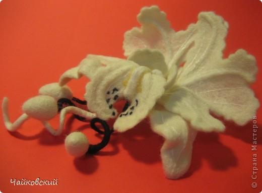 Орхидея катлея фото 6