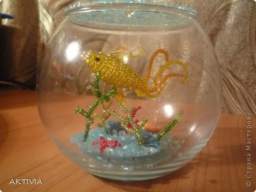 Аквариум с Золотой рыбкой фото 6