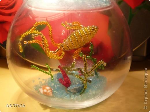 Аквариум с Золотой рыбкой фото 1