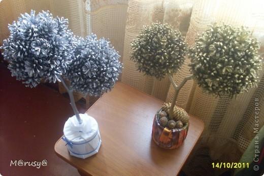у меня появились ещё два шишковых дерева... фото 1