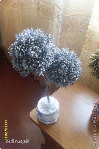 у меня появились ещё два шишковых дерева... фото 2