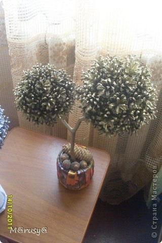 у меня появились ещё два шишковых дерева... фото 3