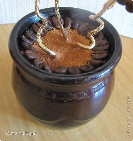 Небольшой кофейный куст в керамическом горшочке.  фото 3