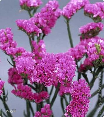 """Вот такие цветочки, под названием статица появились у меня дома! Но оставлять их так просто не захотела, они осыпаются. Вот решила их """"закрепить""""  на дереве. И в итоге вот что получилось! фото 7"""