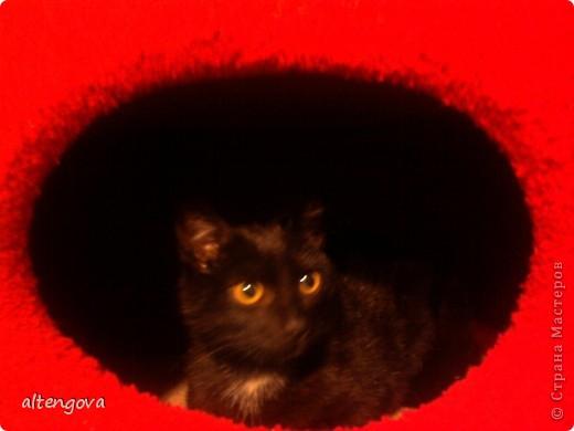 Домик для котика Тепы фото 2