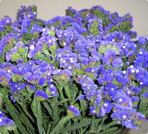 """Вот такие цветочки, под названием статица появились у меня дома! Но оставлять их так просто не захотела, они осыпаются. Вот решила их """"закрепить""""  на дереве. И в итоге вот что получилось! фото 9"""