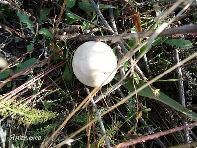 """каждое время года прекрасно по-своему, но осень для меня - это всегда что-то особенное: багрянец листвы, благоухание хризантем, тонкий дым костра... и грибной запах. Еще в детстве, мы всей семьей выходили в """"поход"""" за грибами, а потом с удовольствием жарили их с картошкой... кажется вкуснее ничего и быть не может Увы, нынешняя экологическая ситуация лишила нас этой радости, т.к. живем мы рядом с коксохимическим гигантом, так что грибами остается только любоваться. Приглашаю и вас :) фото 6"""