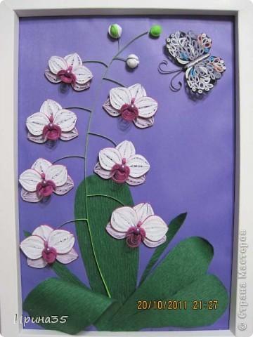 8 октября в Украине отмечали день юриста, а еще в этот день родилась одна моя знакомая - прекраснейший человек, грамотный Юрист (именно с большой буквы), которая является моим учителем и примером для подражания. Она очень любит цветы, а особенно - орхидеи, поэтому я еще летом задумала сделать для нее маленькое панно с изображением этих царских цветов. Теперь, после того как они были подарены с большим опозданием по причине отсутствия именниницы в день рождения, выставляю их на ваш суд, Мастера СМ! фото 6