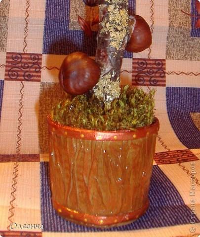 Наконец то в этом году удалось насобирать каштанов. Уже давно зрел план сделать каштановое дерево. И, вот....  фото 4