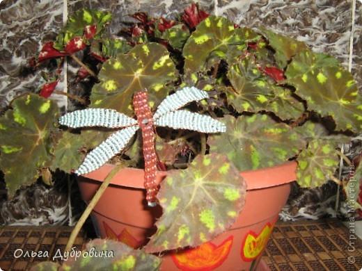 Поделка изделие Бисероплетение Бабочки и другие насекомые Бисер фото 12.