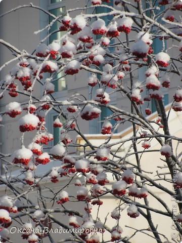 Ну вот решила показать, нашу снежную осень)) фото 9