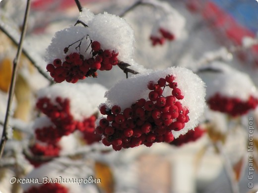 Ну вот решила показать, нашу снежную осень)) фото 11