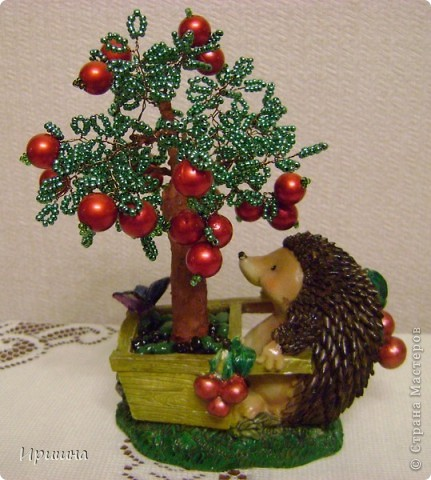 Яблонька ежика фото 1
