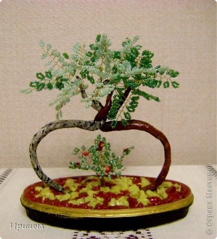 Яблонька ежика фото 3