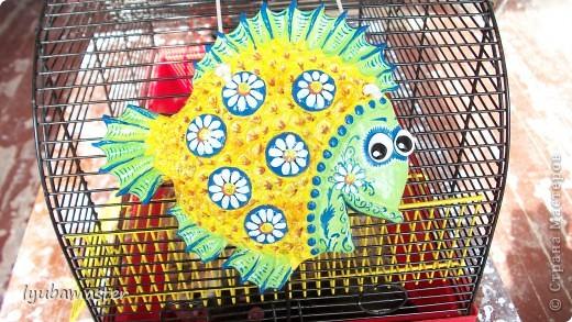 рыбы фото 20