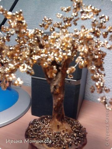 золотое деревце фото 2
