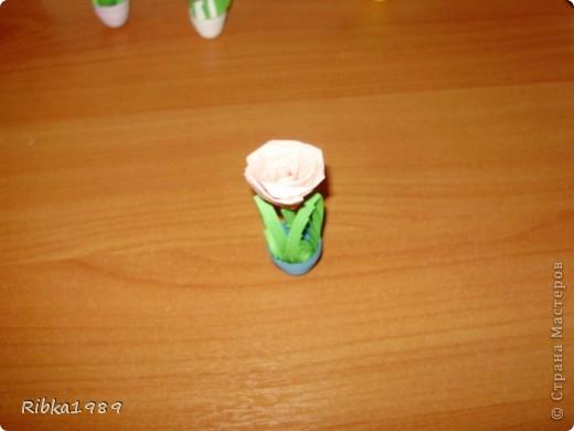 Все вместе. цветочки очень маленькие. фото 5