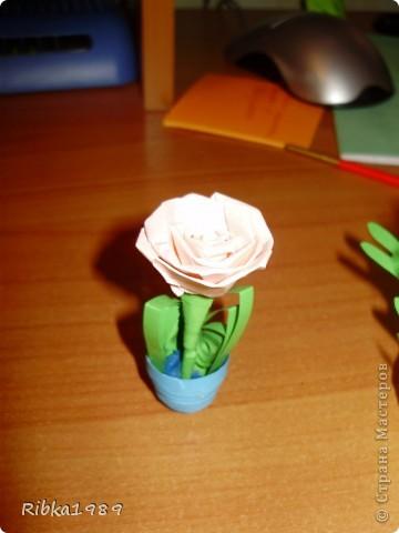 Все вместе. цветочки очень маленькие. фото 8