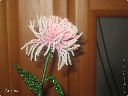 Наши первые цветы, достойные чужого внимания ) Увидела их на сайте Радуга рукоделия, спасибо за МК автору niki_lelik (http://biseroclub.forumy2x2.ru/t1085-topic#14068 ), делаются сравнительно легко., но получаются тяжеловатыми, крепить пришлось на стальную спицу.  фото 2
