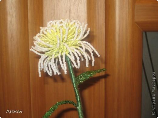 Наши первые цветы, достойные чужого внимания ) Увидела их на сайте Радуга рукоделия, спасибо за МК автору niki_lelik (http://biseroclub.forumy2x2.ru/t1085-topic#14068 ), делаются сравнительно легко., но получаются тяжеловатыми, крепить пришлось на стальную спицу.  фото 3