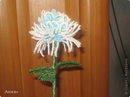 Наши первые цветы, достойные чужого внимания ) Увидела их на сайте Радуга рукоделия, спасибо за МК автору niki_lelik (http://biseroclub.forumy2x2.ru/t1085-topic#14068 ), делаются сравнительно легко., но получаются тяжеловатыми, крепить пришлось на стальную спицу.  фото 4