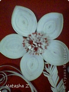 Красно-белые фантазии фото 4