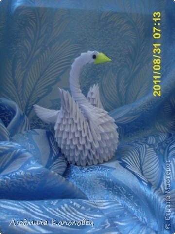 белый лебедь фото 1