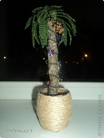 Пальма фото 12