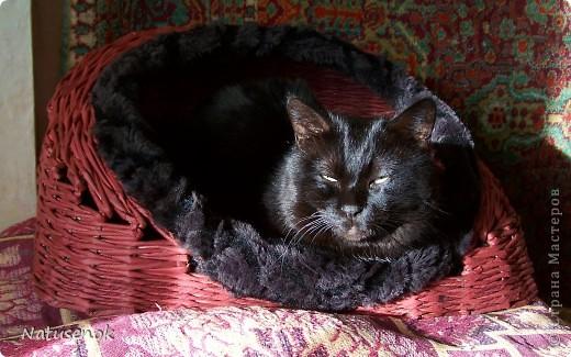 Спасибо Милаше за МК. Кошкин дом. У нас в семье, вот уже 11 лет живет кот Феликс. Решила я ему сплести домик, когда плела очень переживала, а будет ли домик нужен Феликсу, но мои опасение оказались напрасными. Домик полюбился практически с первой минуты. фото 1