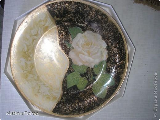 белая роза. фото 1