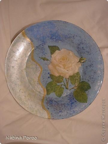 белая роза. фото 2