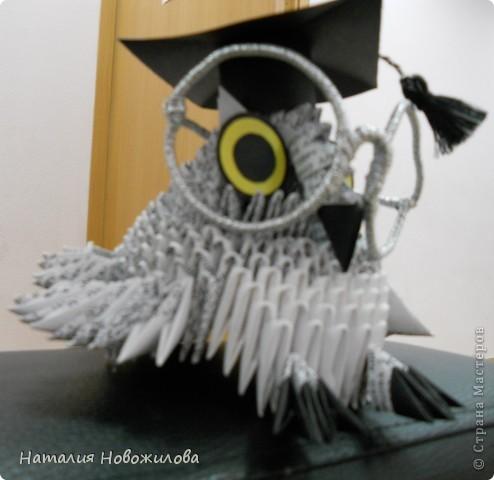 Умная сова фото 3