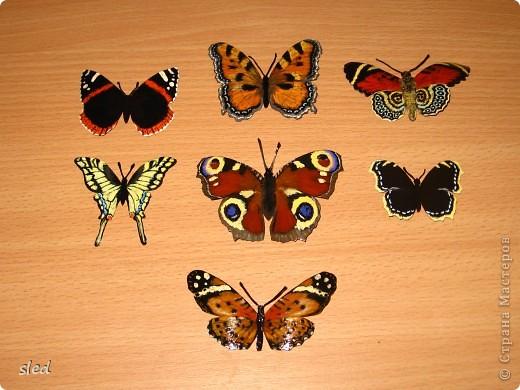 В стране уже много бабочек из бутылок, хочу показать и моих. С них все начиналось. фото 1
