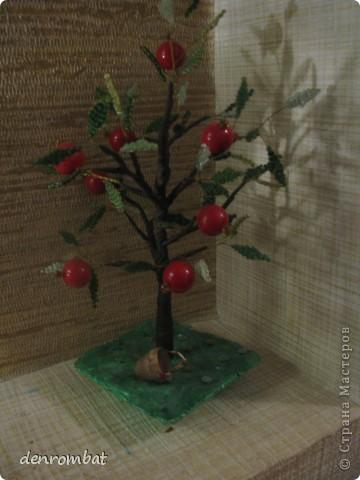 яблоня фото 2