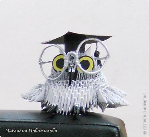 Умная сова фото 4