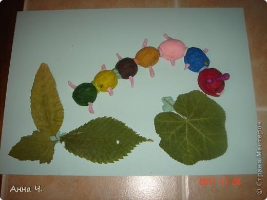 Саша (3,5) раскрасил скорлупки грецких орехов гуашью, слепил их между собой пластилином, сделал ножки, рожки, глазки, ротик (чтоб гусеница улыбалась!) и конечно же листочки которые очень любит гусеничка.  фото 1