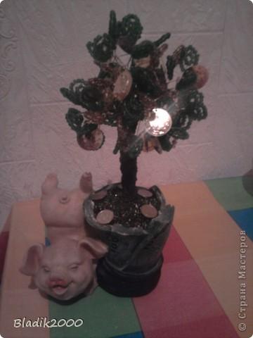 Мое денежное дерево фото 1