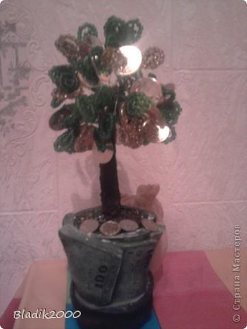 Мое денежное дерево фото 2