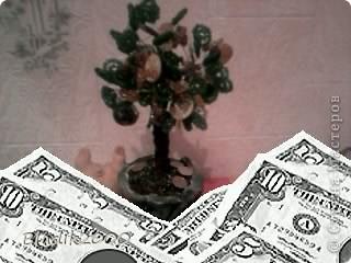 Мое денежное дерево фото 3
