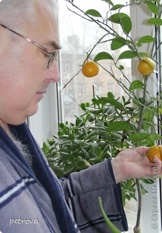 Спрашивают - какие на вкус мандарины, выращенные на балконе. Если посмотрите этот репортаж до конца - увидите.   Вот они какие красивые ...   фото 12