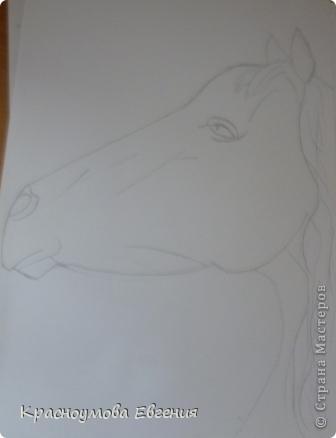Здравствуйте! Я хочу показать вам, как рисовать голову лошади. Это очень просто!  фото 8