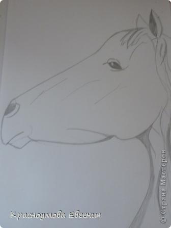 Здравствуйте! Я хочу показать вам, как рисовать голову лошади. Это очень просто!  фото 12