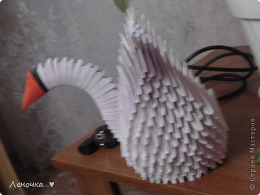 А вот и мои лебеди фото 3