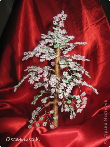 Весенние деревца фото 1