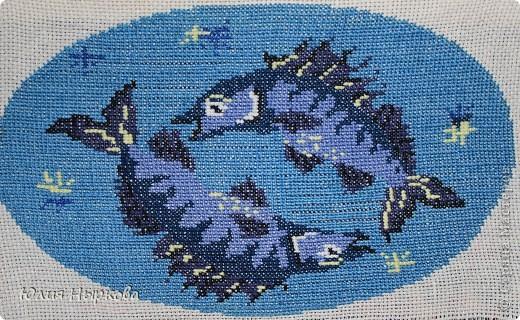 Рыбы фото 1