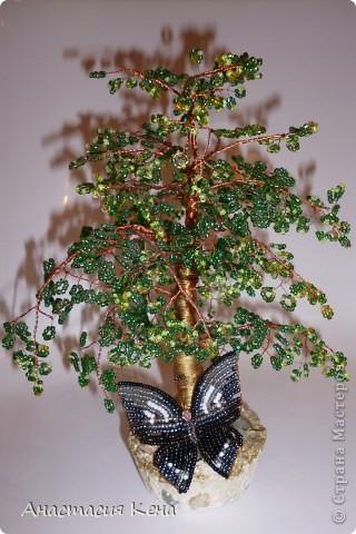 Новенькое (Дерево №3) фото 7