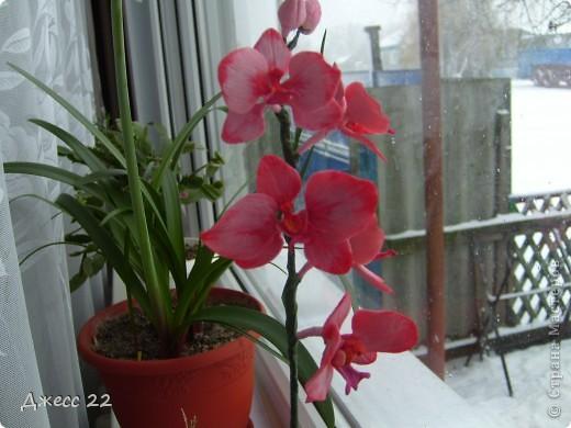 Веточка орхидеи фото 1