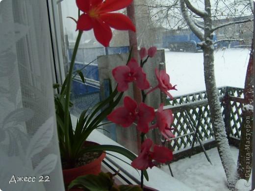 Веточка орхидеи фото 2